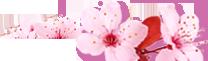 Салон красоты на Левом берегу - Сан-Тропе . Услуги Подолога и Массажиста